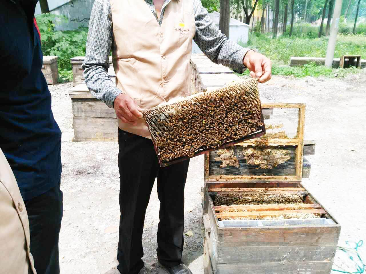 Real honey process